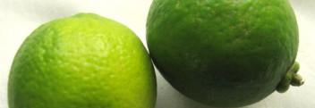Limettenöl naturrein, destilliert