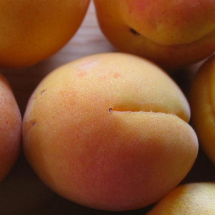 Aprikosenkernöl kaltgepresst BIO    250ml