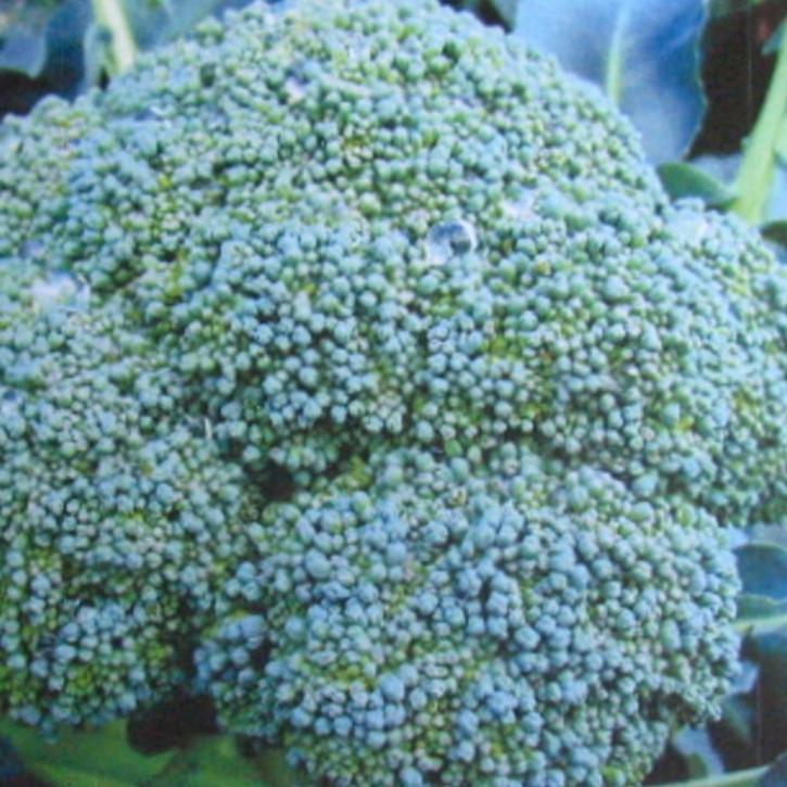Brokkolisamenöl kaltgepresst bio    250ml