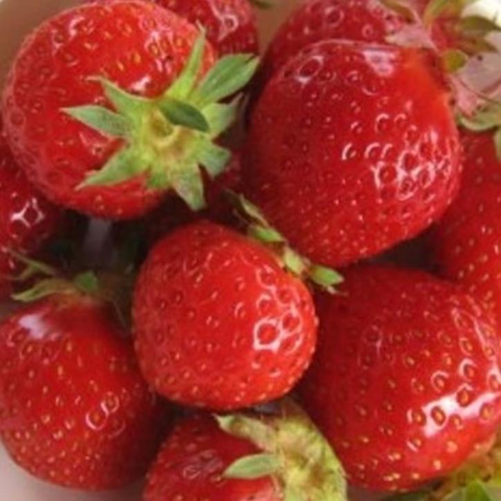 Parfümöl Erdbeere    100ml