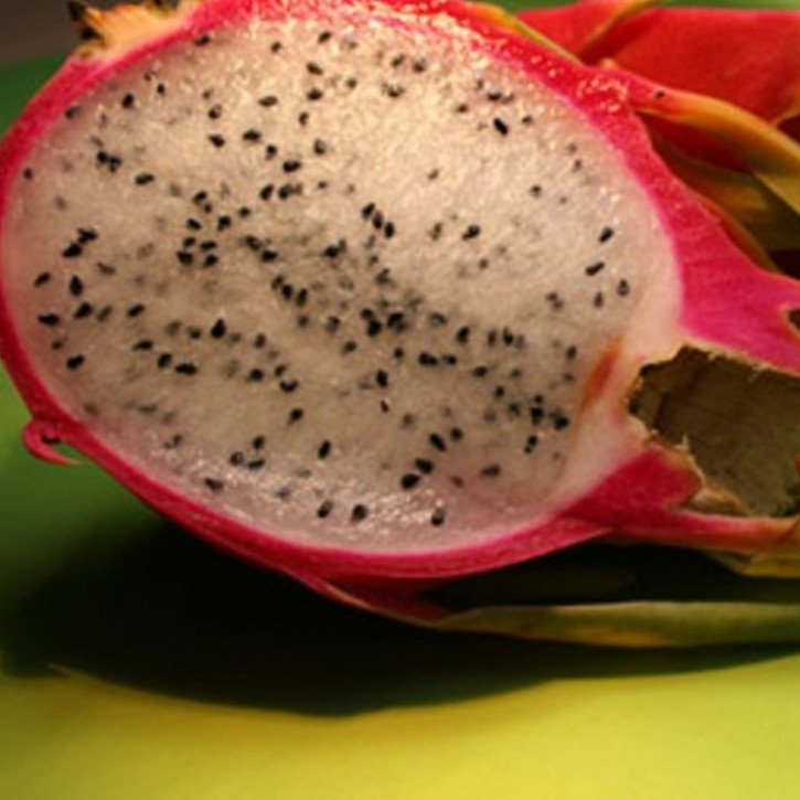 Parfumöl Tropic Pitahaya     20ml