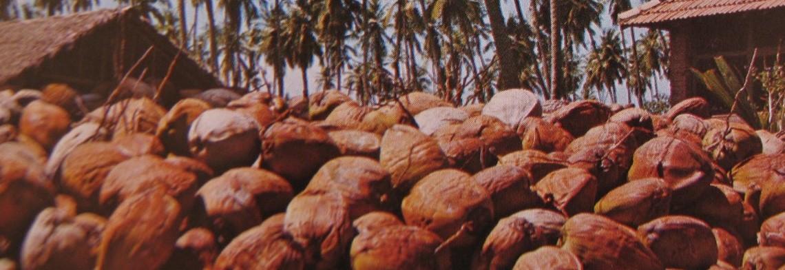 Kokosöl BIO raffiniert