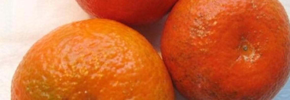 Tangerinenöl naturrein